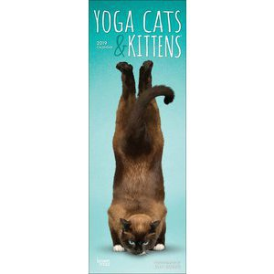 Calendrier 2019 Yoga chat et chaton slim