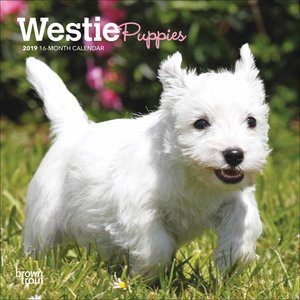 Mini calendrier 2019 West highland white terrier chiot