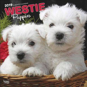 Calendrier 2019 Westie chiot