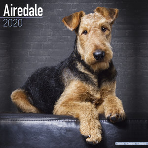 Calendrier 2020 Airedale terrier