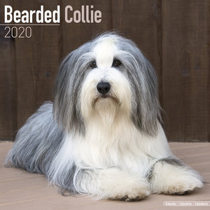 Calendrier 2020 Bearded collie