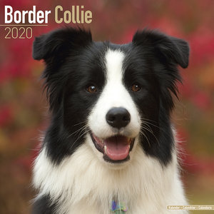Calendrier 2020 Border collie
