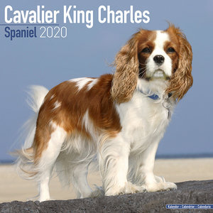 Calendrier 2020 Cavalier king charles