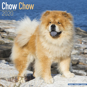 Calendrier 2020 Chow chow