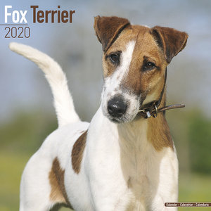 Calendrier 2020 Fox terrier