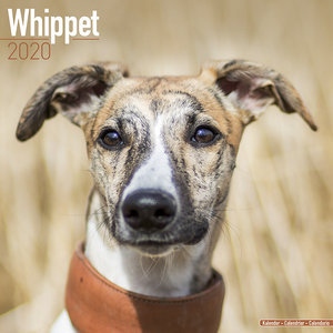 Calendrier 2020 Whippet