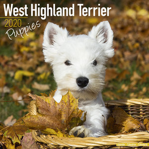 Calendrier 2020 West highland terrier chiot