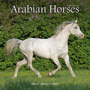 Calendrier 2020 Chevaux arabes
