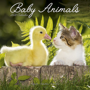 Calendrier 2020 Bebes animaux