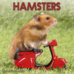 Calendrier 2020 Hamster