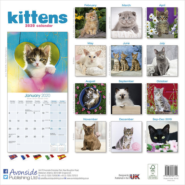 Calendrier Chat 2020.Calendrier 2020 Chatons