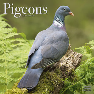 Calendrier 2020 Pigeon