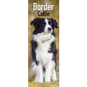 Calendrier 2020 Border collie slim