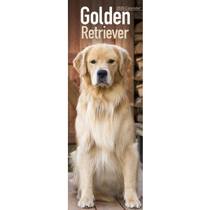 Calendrier 2020 Golden retriever slim