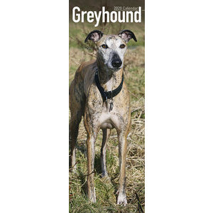 Calendrier 2020 Greyhound slim