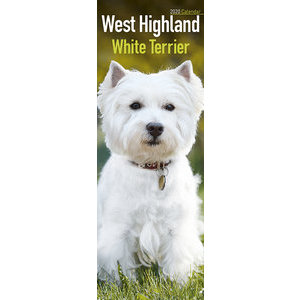 Calendrier 2020 West highland white terrier slim