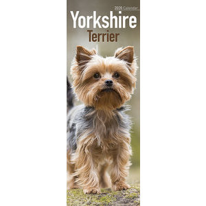 Calendrier 2020 Yorkshire terrier slim