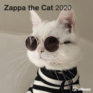 Calendrier 2020 Chat zappa top model