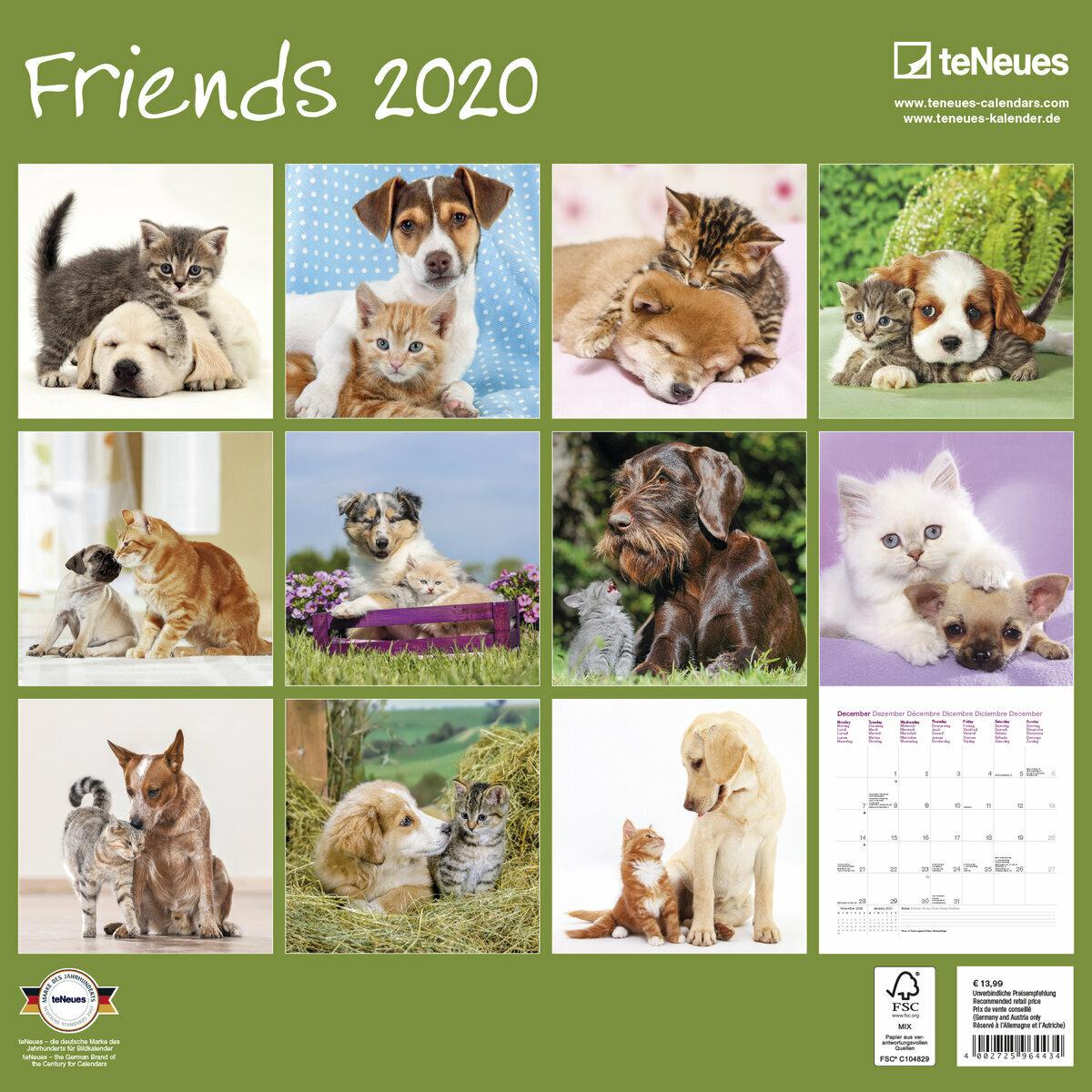 Fun Chiens 2020 Chien Calendrier mural 2020 2020