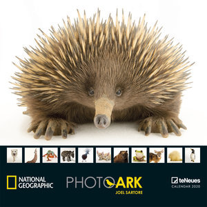Calendrier 2020 National Geographic photo ARK espèce voie disparition