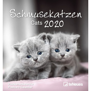 Calendrier 2020 carte postale détachable CHAT