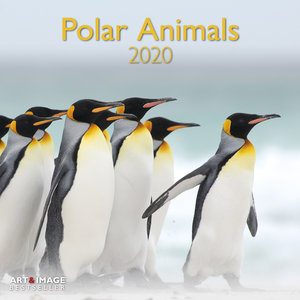 Calendrier 2020 Animaux polaire avec poster offert