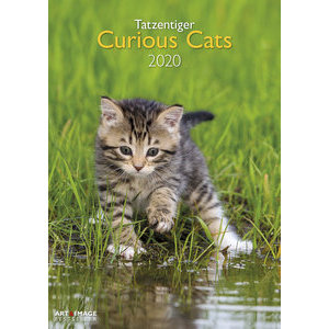 Maxi Calendrier 2020 Chat curieux