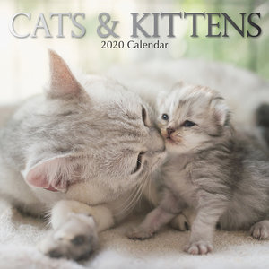 Calendrier 2020 Chat et chaton