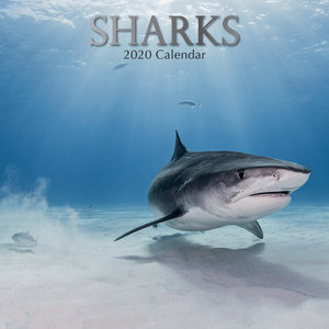 Calendrier 2020 Requin