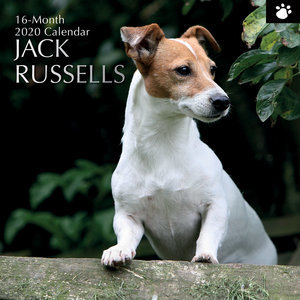 Calendrier 2020 Jack russell