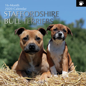 Calendrier 2020 Staffordshire bull terrier