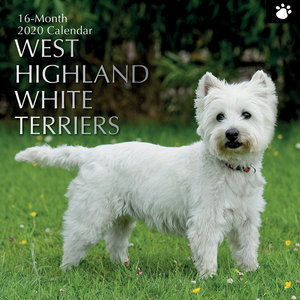 Calendrier 2020 West highland white terrier
