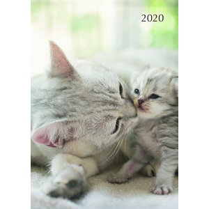 Agenda chat et chaton 2020