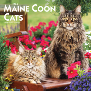Calendrier 2020 Maine coon