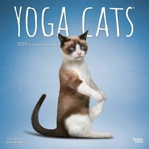 Calendrier 2020 chats yoga