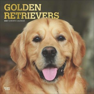 Calendrier 2020 Golden Retriever