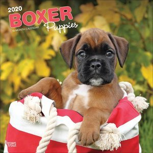 Calendrier 2020 Boxer chiot