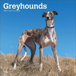 Calendrier 2020 Greyhound