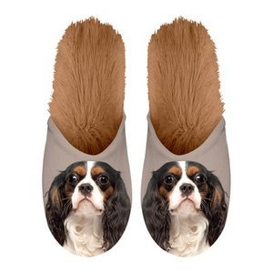 Chaussons Cavalier king charles