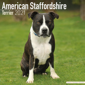 Calendrier 2021 American staffordshire terrier