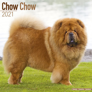 Calendrier 2021 Chow chow