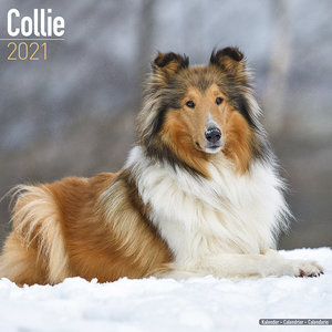 Calendrier 2021 Colley