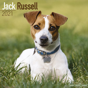 Calendrier 2021 Jack russell