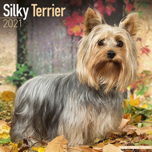 Calendrier 2021 Silky terrier