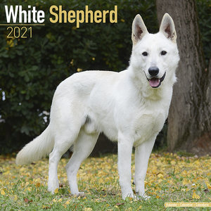 Calendrier 2021 Berger blanc suisse