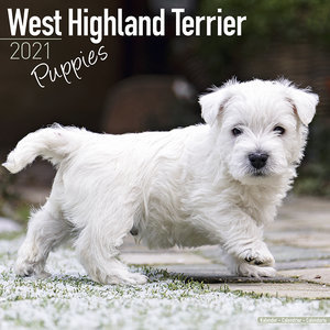 Calendrier 2021 West highland terrier chiot