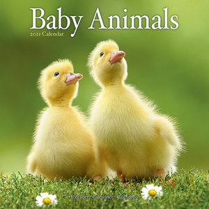 Calendrier 2021 Bebes animaux
