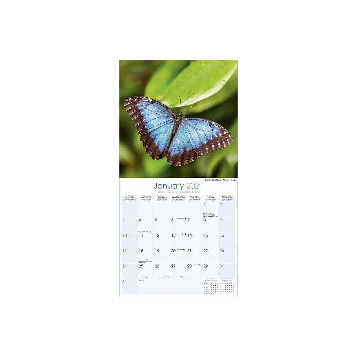 Papillon 2021