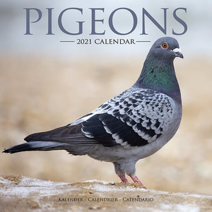 Calendrier 2021 Pigeon