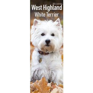 Calendrier 2021 West highland white terrier slim